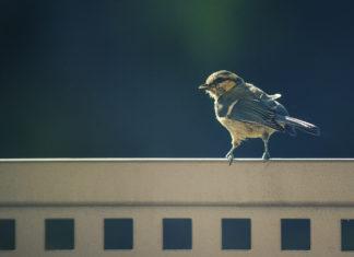 Sparrow on a Ledge