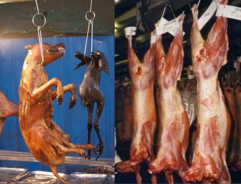 Dog and Lamb Carcass