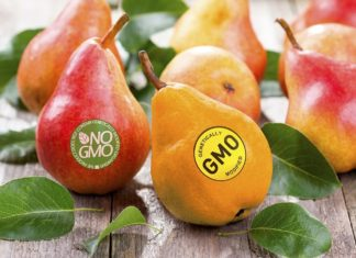 GMO Pears