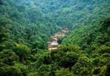 India Forests