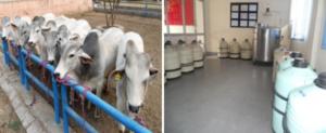 India Genes livestock