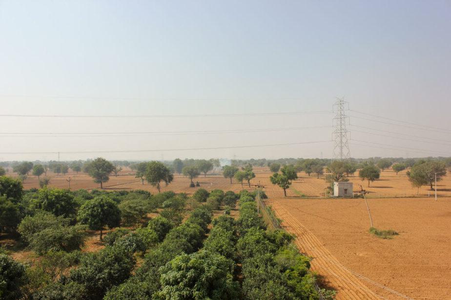 Asha fields
